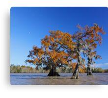 Majestic Cypress Canvas Print