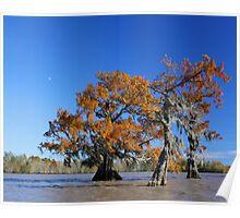 Majestic Cypress Poster
