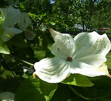 White Flower by Kyle Parkin