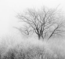 At the Brink of Winter by April Koehler
