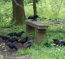 The Gathering by linsads
