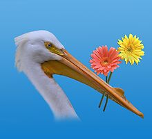 American White Pelican with Flowers by Delores Knowles