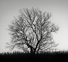 Annette's Tree by Diane Trummer Sullivan