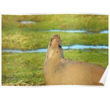 Look Up - Watercolor Grey Seal Poster