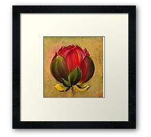 The Lotus Bulb Framed Print
