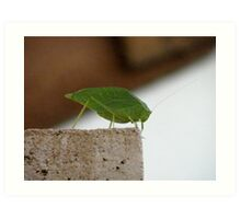 Is this a Leaf Hopper? Art Print