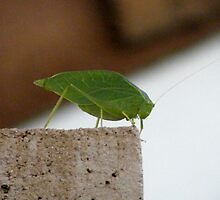 Is this a Leaf Hopper? by DonnaMoore