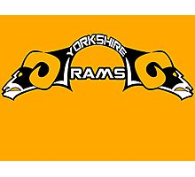 Yorkshire Rams Photographic Print