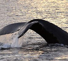 Sunset Whale Tail....Dedicated to Laura by Gina Ruttle  (Whalegeek)