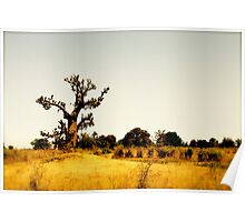 a vast Senegal landscape Poster