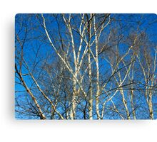 In the raw Canvas Print