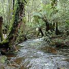 Mt Field National Park, Tasmania by SusanAdey