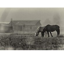 Horses -Bedford, PA Photographic Print