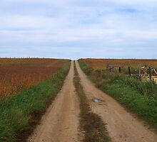 Country Roads- Through the Fields by Timothy Eric Hites