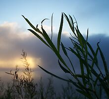 Lakeside- Growing Wild in the Breeze by Timothy Eric Hites