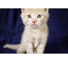 Snuffy Kitty Photographic Print
