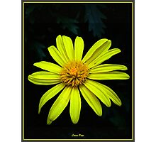 Simple Yellow Beauty Photographic Print