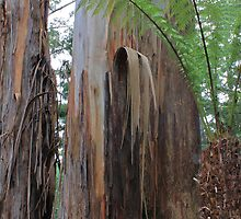 Stringy Bark and Tree Fern by Joanna Beilby