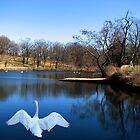 Swan Lake by NatureGreeting Cards ©ccwri