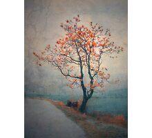 Between Seasons Photographic Print