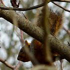a cautious squirrel by tego53