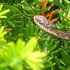 Snake in the Grass by unigrackon