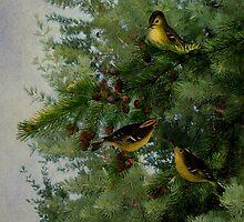 Birds In My Tamarack Tree by Sandra Foster