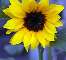 Solemn Sunflower by play4ful