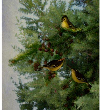 Birds In My Tamarack Tree Sticker