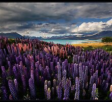 LupinScape by Robert Mullner