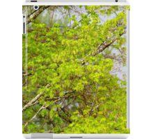 Maple tree blossoms 1 iPad Case/Skin