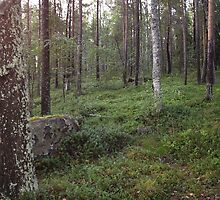 Karelia by milzi