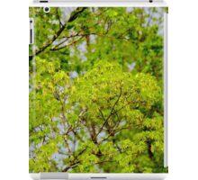 Maple tree blossoms 2 iPad Case/Skin