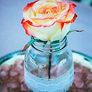 Bridal Rose by comeinalone