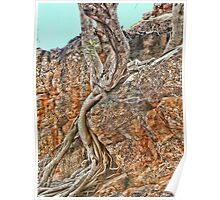 Gum Tree in Central Australia Poster