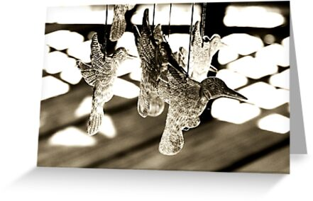 Suspended Hummingbirds by DDLeach