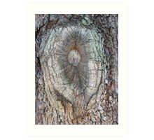 Bulls Eye in the Bark Art Print