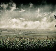 Green and Grey by Robert Plummer