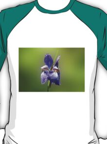 Japanese Iris - Iris sanguinea - Purple T-Shirt