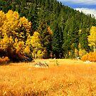 """""""Sierra Meadow"""" by Lynn Bawden"""