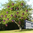 Apple Tree by EMMET BYRNE