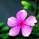 After The Rain by RajeevKashyap