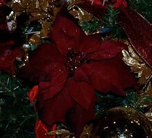 Red Christmas... by Carol Clifford