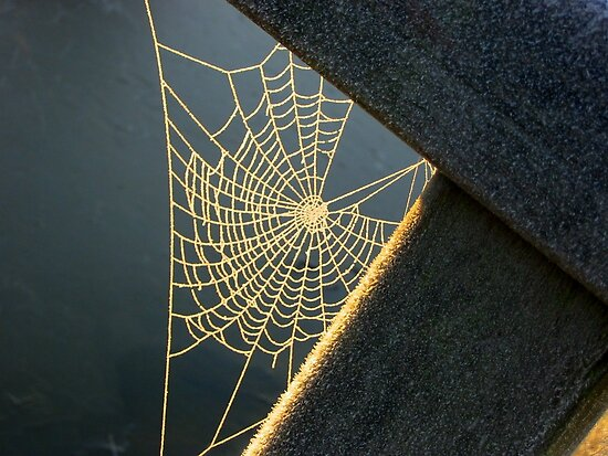 Sunkissed Web by ienemien