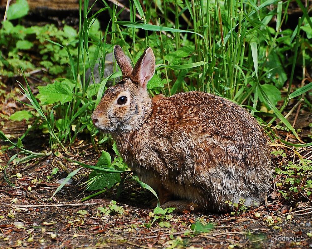 Rabbit  by Rodney55