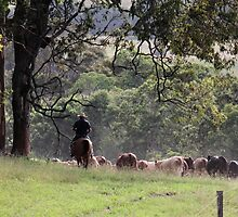 Taking the cattle back to the paddock by Danielle Espin