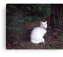Casper in the garden Canvas Print