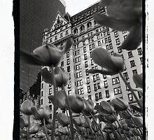 Plaza Hotel by Bruce Hilliard