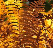 fern by Bruce Hilliard