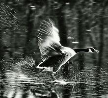 Goose on Ice ~ Mangerton, Dorset  by Susie Peek